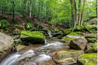 Mountain stream flows among the rocks through green forest