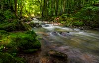 Rapid stream flow through ancient green Carpathian forest. stones covered with moss lay on the shore. beautiful nature view in summer time.