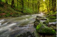 Rapid stream flow through ancient green forest. stones covered with moss lay on the shore. beautiful nature view in summer time.