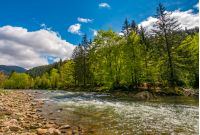 River flows among of a green forest at the foot of the mountain. Picturesque nature area in Carpathians. Serene springtime day under blue sky with some clouds