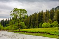 River flows among of a green forest at the foot of the mountain. picturesque nature of rural area in Carpathians