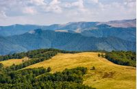 alpine grassy meadow in autumnal Carpathians. lovely landscape of TransCarpathia with beech forest on hills and gorgeous Svydovets mountain ridge in a distance