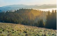 autumn landscape in mountains. spruce forest on a grassy hill. glowing fog in the distant valley. wonderful scenery at sunrise