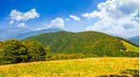 early autumn mountain landscape. green meadow near the forest on the hillside in Carpathians