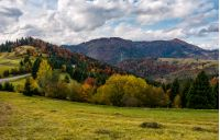 autumnal scenery in Carpathian mountains. beautiful countryside with colorful foliage forest on a cloudy day