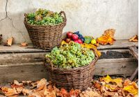 autumnal fruit still life with apples, quince, grapes and leaves on old wall background