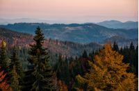 beautiful autumn scenery in mountains. colorful foliage in forest at sunset