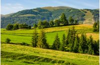 beautiful countryside with trees on hillside. lovely mountainous landscape in summer
