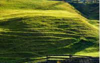 beautiful grassy hillside in sunlight. lovely agricultural background