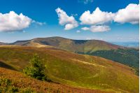 beautiful hilly landscape of Carpathian mountains. lovely scenery in late summer. blue sky with some fluffy clouds