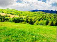 beautiful mountainous countryside in springtime. grassy meadows and forested hill. freshness of nature concept