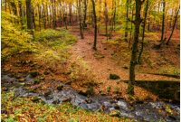 brook in autumn forest on hillside. beautiful nature scenery