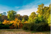 city park in deep autumn. lovely urban scenery in the morning. natural colorful background