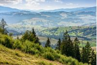 Classic Carpathian mountains landscape in summer. Spruce forest on the edge of hillside over the valley panoramic view
