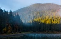 coniferous forest in fog around the mountain lake. lovely autumn scenery in early morning