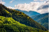 forest; mountain; coniferous; hillside; landscape; slope; pine; green; sky; cloud; tree; nature; meadow; view; spruce; green; background; blue; springtime; cloud; beautiful; top; travel; weather; scene; wild; wood; hill; outdoor; tourism; fir