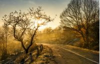 country road in morning fog with naked trees. beautiful autumn scenery