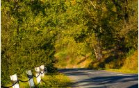 countryside road through forest. lovely early autumn atmosphere