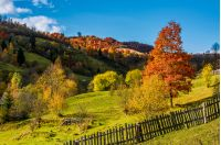 deep autumn sunny day in mountainous rural are. beautiful orange foliage of a tree on a grassy meadow behind the fence. gorgeous weather with few clouds on a blue sky
