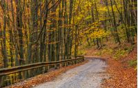 descend road turnaround in autumn forest. lovely nature scenery with lots of colorful foliage on hillside