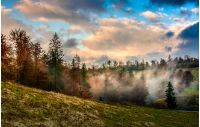 evening fog in forest on a hill. dramatic sky in autumn at sunset