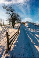 fence and tree by the road uphill in winter. lovely rural scenery in mountainous area