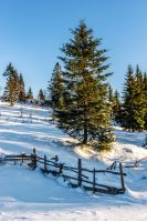 fence on the snow-covered mountain slope near the spruce forest in winter before sunset