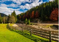 fence on the meadow near forest river in autumn mountains. few red foliage trees among spruce forest on hill