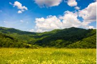 field with wild herbs in summer. mountain landscape in fine weather with blue sky and puffy clouds