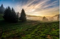 rural; landscape; fog; forest; sunrise; mountain; sheep; haze; flock; mammal; morning; romania; herd; beautiful; farm; view; light; season; meadow; green; nature; grass; sky; scenery; environment; hill; lamb; natural; livestock; valley; outdoor; tree; country; fence; autumn; fall; spruce; background; foggy; mist; conifer; mystery; dawn; idyllic; dusk; ridge; color; weather; dramatic; fir