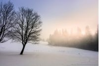 morning fog in spruce forest in winter sunrise