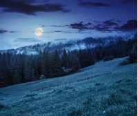 cold morning fog with hot sunrise in conifer forest in Carpathian mountains at night in full moon light