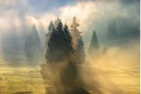 cold morning fog with hot sunrise in conifer forest in  mountains of Romania