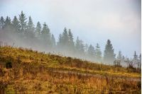 fog; forest; morning; mountain; tree; landscape; pine; park; conifer; nature; mist; autumn; haze; wood; season; environment; mystery; sky; travel; hill; cloud; meadow; valley; dramatic; fir; natural; outdoor; country; yellow