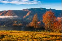 cold morning fog with golden hot sunrise in the valley of Carpathian mountain range. green grass and trees with colorful foliage on the hillside meadow lit by first rays of sun