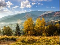 cold morning fog with golden hot sunrise in the mountainous rural area. trees with Yellow foliage near the hillside meadow