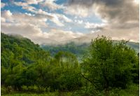 mountain ridge in fog. green forest on hillside in springtime. mysterious weather at sunrise