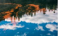 beautiful nature background of foliage on the water reflecting spruce forest and cloud