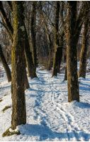 empty footpath in winter forest