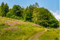 footpath to forest through the meadow with purple flowers