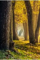 tall trees with yellow and orange foliage in autumn forest on sunny day