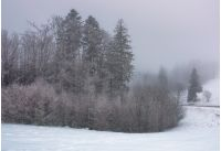 forest in haze with trees in hoarfrost. lovely nature scenery in winter