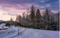 forest in hoarfrost on snowy hillside at dawn. gorgeous nature scenery in winter with magenta sky