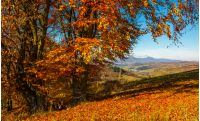 bench near tall trees with red foliage on hillside in Carpathian mountains with high peak in the distance on sunny autumn day