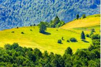 mountain summer landscape. forest near meadow on hillside