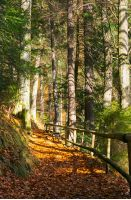 forest path covered in weathered foliage. wooden fence along the edge. beautiful autumn scene in evening light