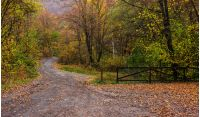 park; trail; path; forest; green; foliage; nature; scenic; trees; wood; tree; grass; autumn; wooden; walk; wilderness; old; season; outdoor; fence; bush; woods; road