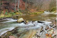 forest river with rocky shores. naked trees and fallen foliage on cold and gloomy november day