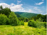 forested area in mountains. calm nature with green grassy meadow and cloudy sky