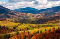 forested rural area on rolling hills in autumn. gorgeous mountain landscape on a cloudy day